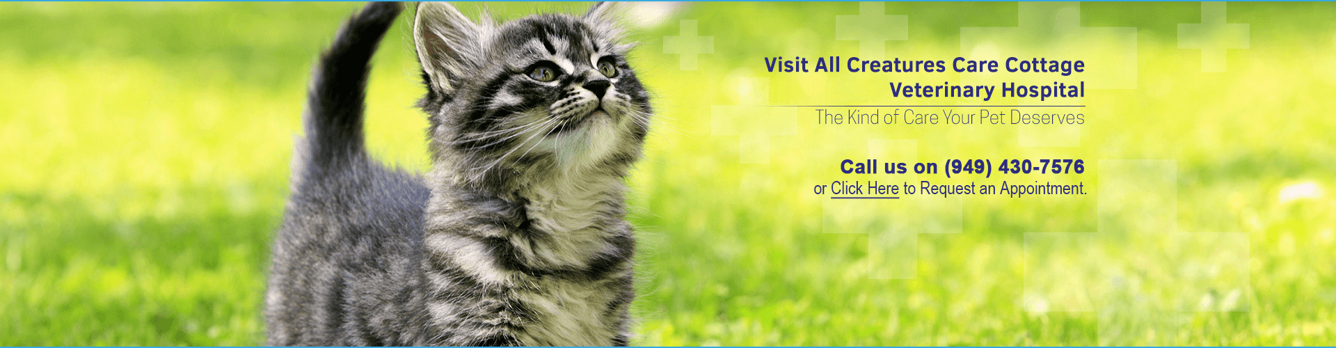 Veterinary Hospital Costa Mesa Cat treatments banner