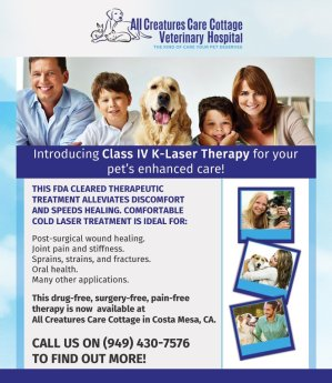 Class IV Laser Therapy Promo Banner