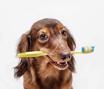 animal dental care in Costa Mesa