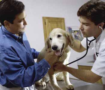 offers emergency care for pets
