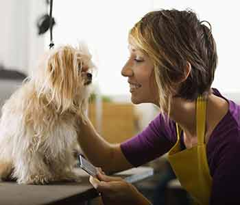 Costa Mesa area practice offers pet boarding