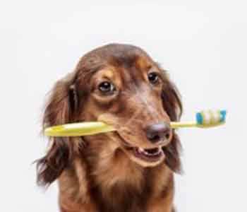 pet dentist describes the importance of dental care for dogs