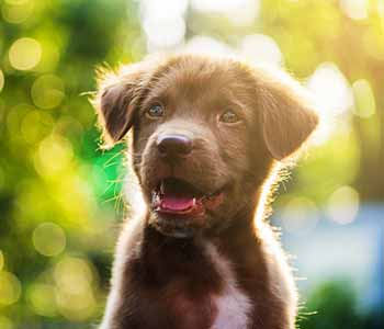 What to expect after a dog's spaying