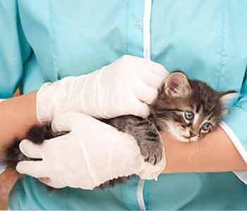 veterinary surgeon available for Costa Mesa and Newport Beach pets