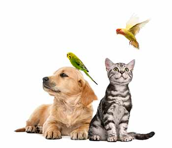 Protect your pets from natural disasters with help from Dr. Rand Spongberg of All Creatures Care Cottage in Costa Mesa, CA.