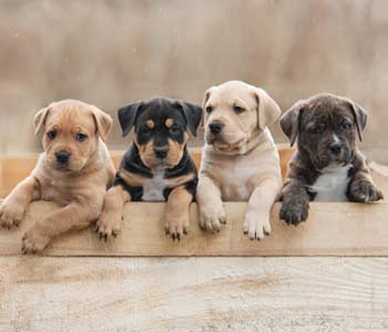 Modern Puppy Training Tips in Costa Mesa area