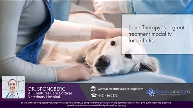 Laser Treatment for Arthritis in dogs and other pets