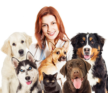Animal Hospital for All Creatures Healthcare in Costa Mesa area